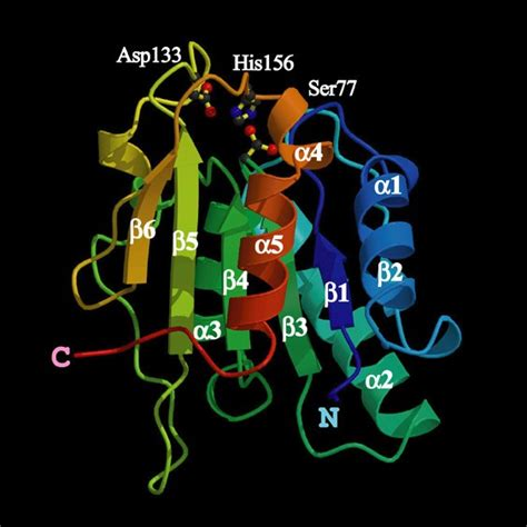 All about Chemistry: ENZIM LIPASE (STEAPSIN)
