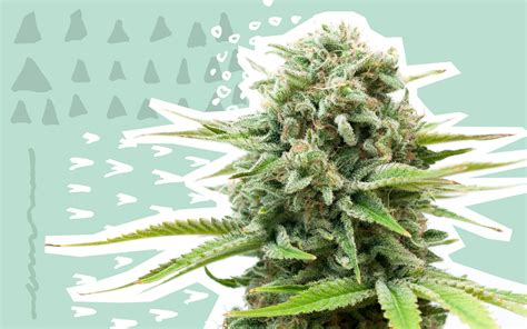 Leafly's Faves 2018: Cannabis Strains | Leafly